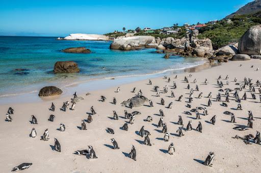 πιγκουίνοι Μέλισσες